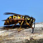 Come non far tornare le vespe